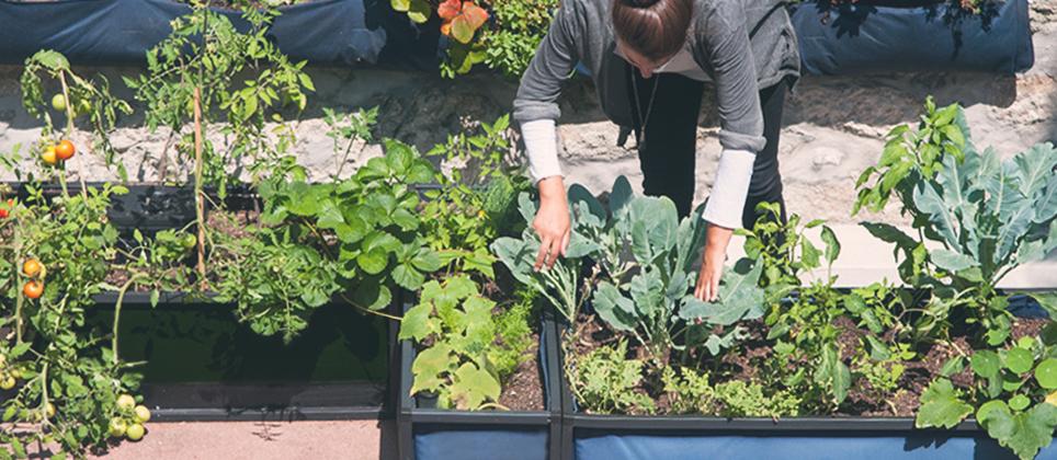 Controle biológico em hortas urbanas: Uma proteção sustentável
